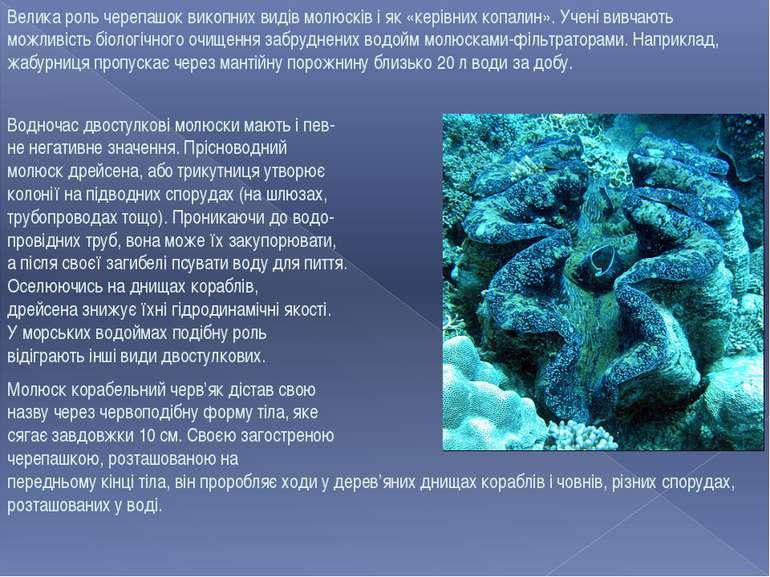 Велика роль черепашок викопних видів молюсків і як «керівних копалин». Учені ...