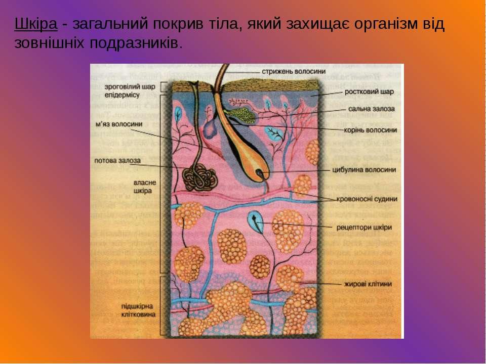 Шкіра - загальний покрив тіла, який захищає організм від зовнішніх подразників.