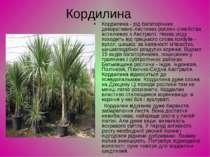 Кордилина Кордилина - рід багаторічних декоративно-листяних рослин сімейства ...
