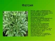 Фатсия Фатсия - одне з найкрасивіших рослин сімейства аралієвих. Хоч і цвіте ...