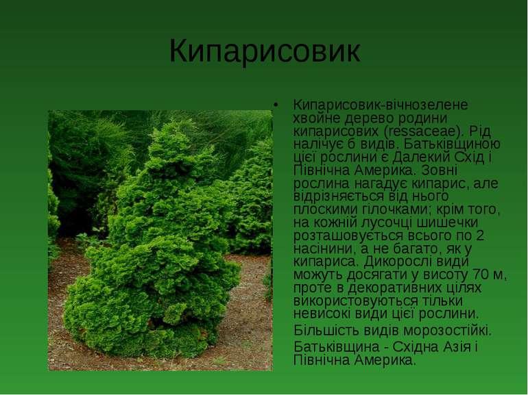 Кипарисовик Кипарисовик-вічнозелене хвойне дерево родини кипарисових (ressace...