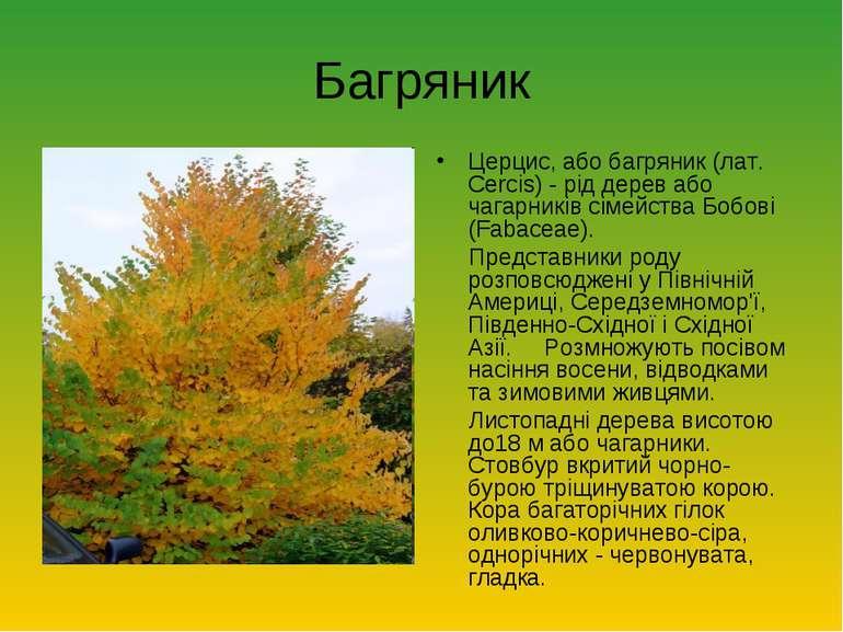 Багряник Церцис, або багряник (лат. Cercis) - рід дерев або чагарників сімейс...