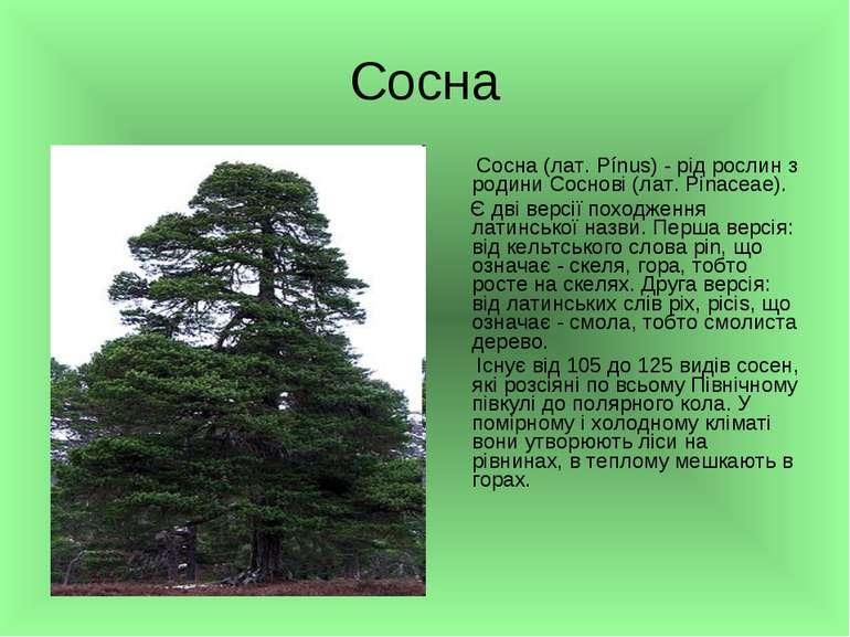 Сосна Сосна (лат. Pínus) - рід рослин з родини Соснові (лат. Pinaceae). Є дві...