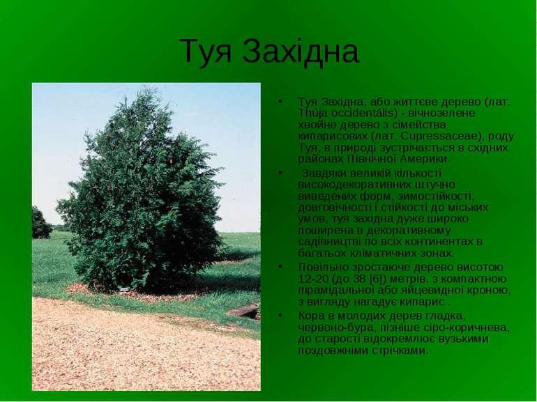 Туя Західна Туя Західна, або життєве дерево (лат. Thúja occidentális) - вічно...