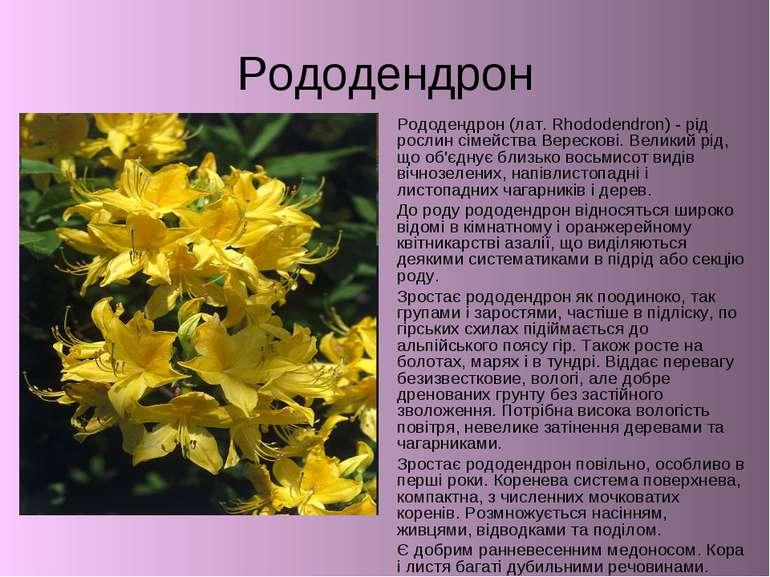 Рододендрон Рододендрон (лат. Rhododendron) - рід рослин сімейства Верескові....