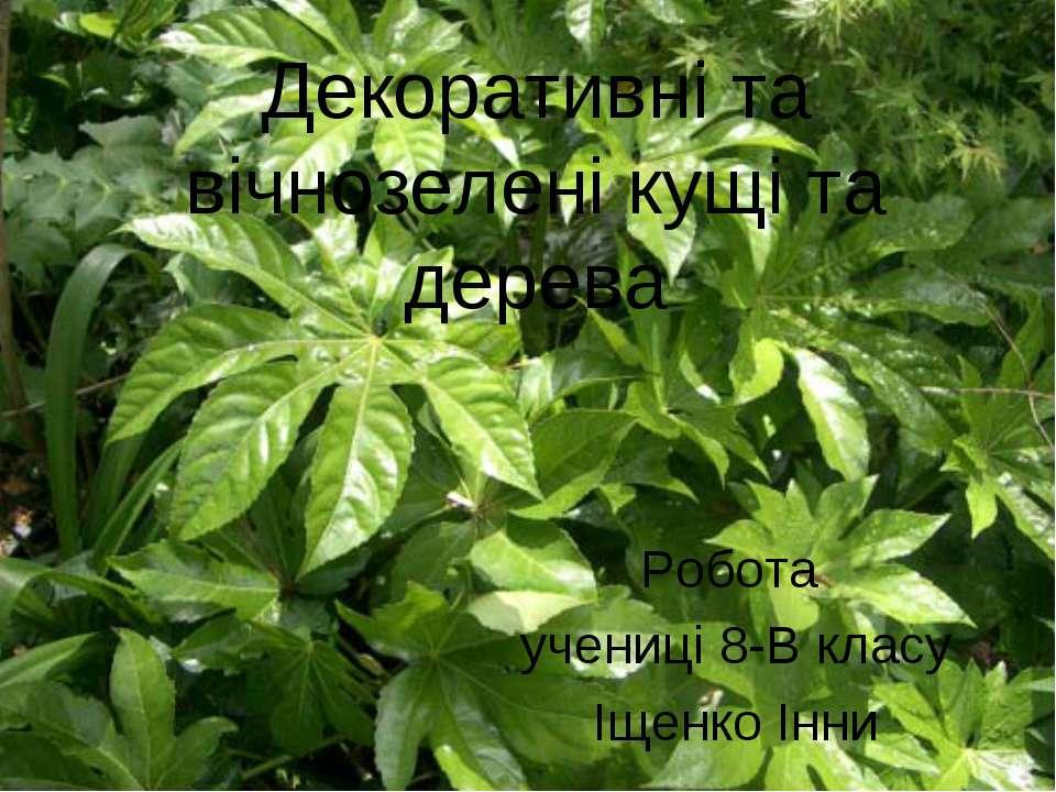 Декоративні та вічнозелені кущі та дерева Робота учениці 8-В класу Іщенко Інни