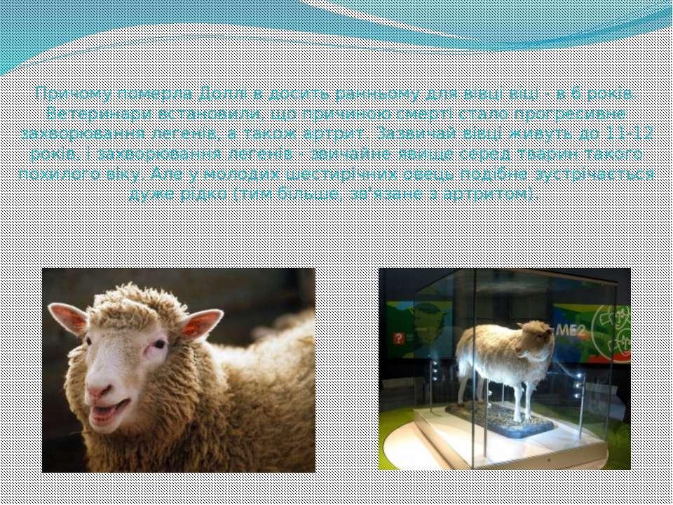 Причому померла Доллі в досить ранньому для вівці віці - в 6 років. Ветеринар...