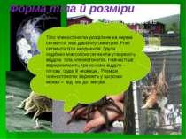 Форма тіла й розміри Тіло членистоногих розділене на окремі сегменти, має дво...