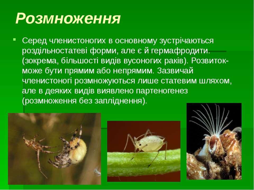 Розмноження Серед членистоногих в основному зустрічаються роздільностатеві фо...