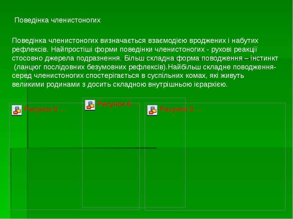 Поведінка членистоногих Поведінка членистоногих визначається взаємодією вродж...