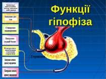 Функції гіпофіза