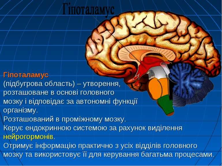 Гіпоталамус (підбугрова область) – утворення, розташоване в основі головного ...