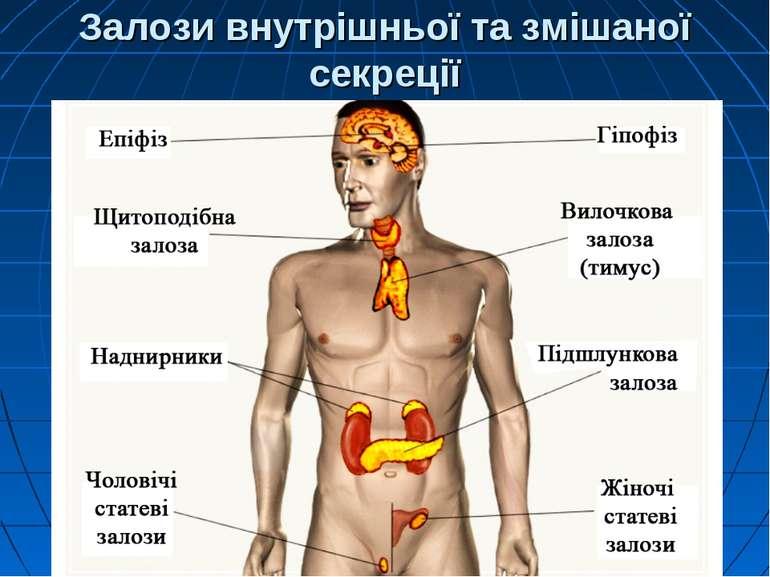 Залози внутрішньої та змішаної секреції