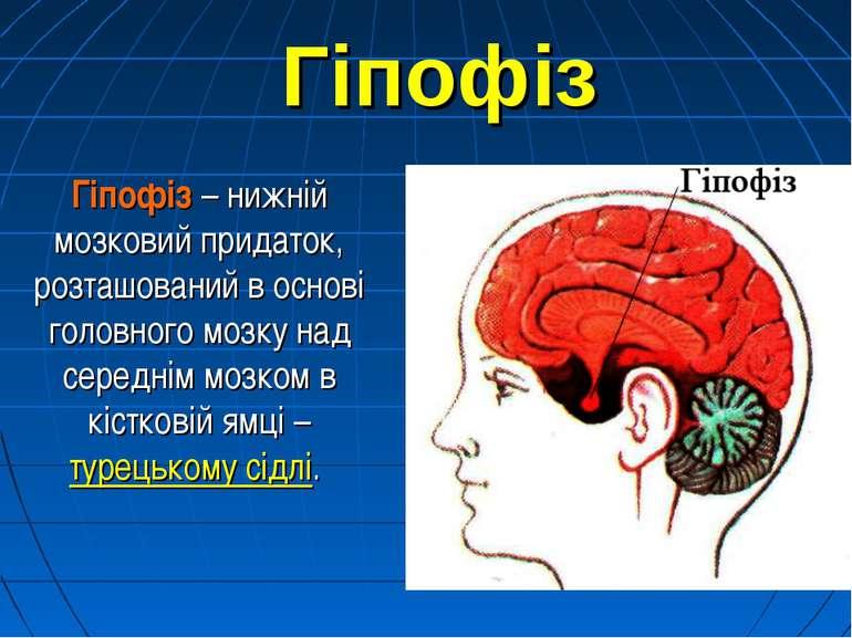 Гіпофіз Гіпофіз – нижній мозковий придаток, розташований в основі головного м...