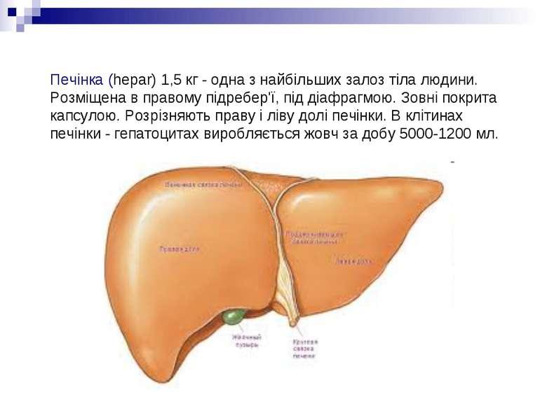 Печінка (hepar) 1,5 кг - одна з найбільших залоз тіла людини. Розміщена в пра...