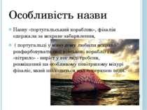 Особливість назви Назву «португальський кораблик», фізалія одержала за яскрав...