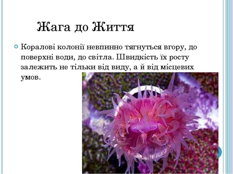 Жага до Життя Коралові колонії невпинно тягнуться вгору, до поверхні води, до...