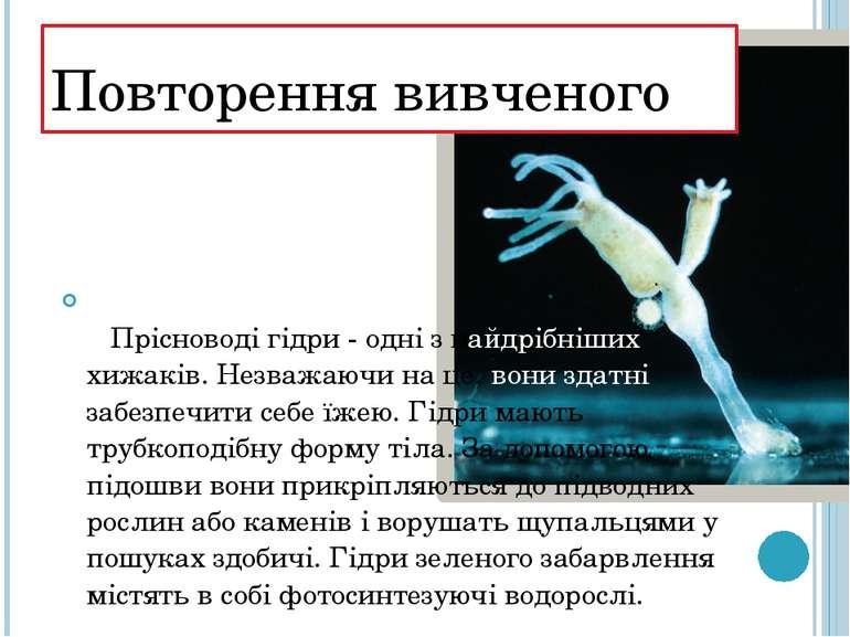 Повторення вивченого  Прісноводі гідри - одні з найдрібніших хижаків. Незва...