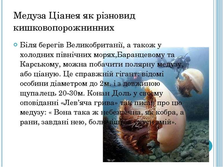 Медуза Ціанея як різновид кишковопорожнинних Біля берегів Великобританії, а т...
