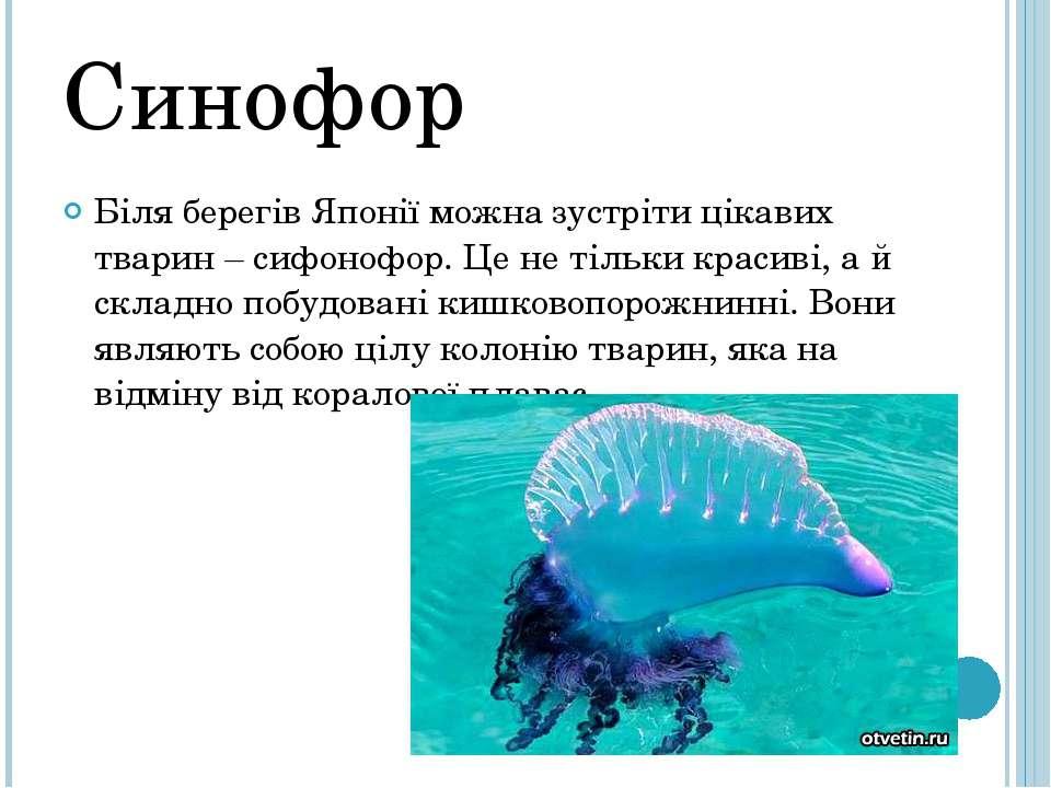 Синофор Біля берегів Японії можна зустріти цікавих тварин – сифонофор. Це не ...