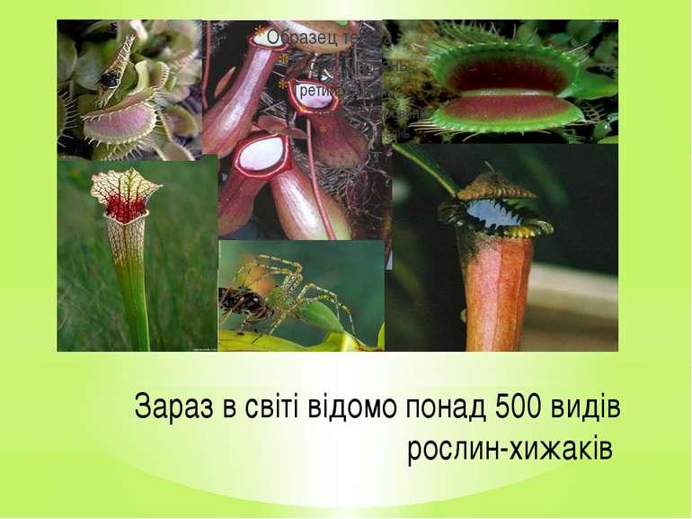 Зараз в світі відомо понад 500 видів рослин-хижаків
