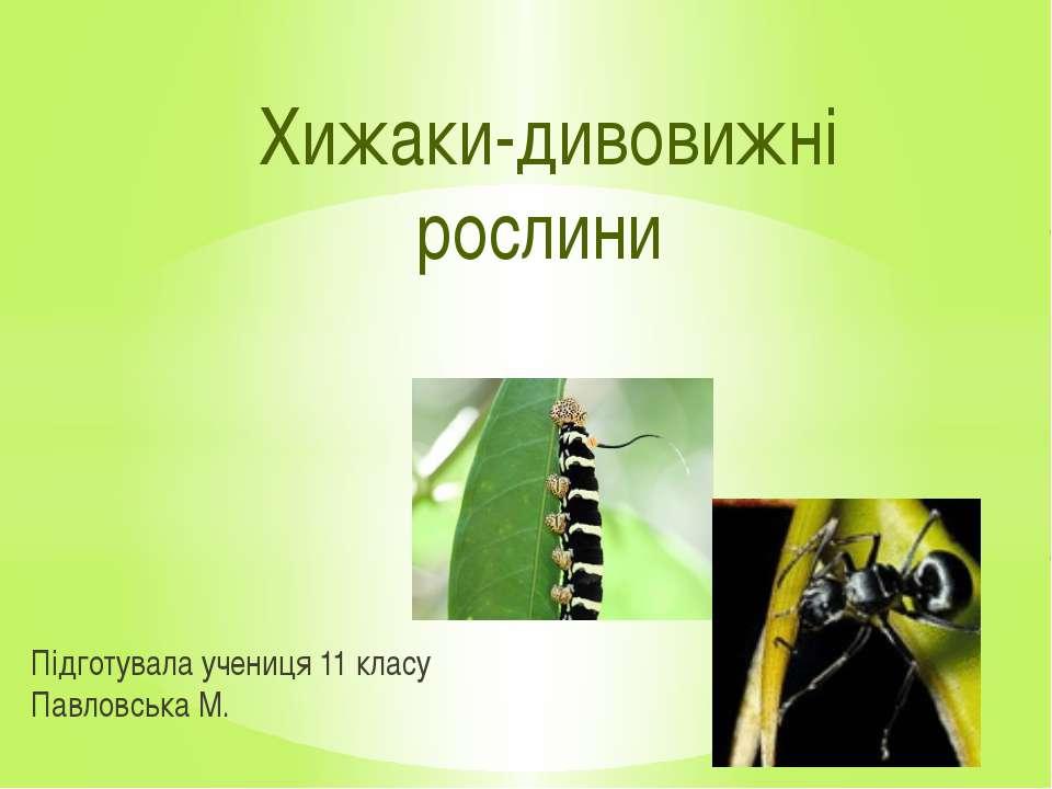 Підготувала учениця 11 класу Павловська М. Хижаки-дивовижні рослини