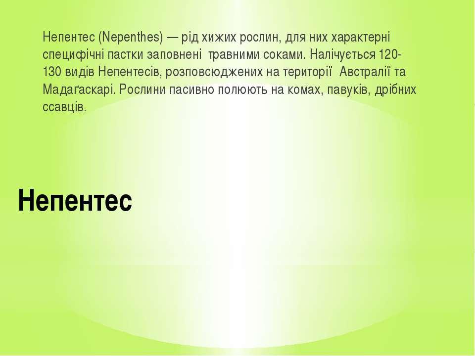 Непентес Непентес (Nepenthes) — рід хижих рослин, для них характерні специфіч...