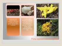 Роль одноклітинних грибів