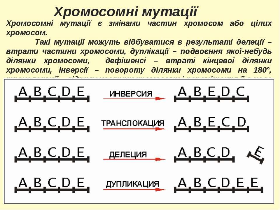 Хромосомні мутації Хромосомні мутації є змінами частин хромосом або цілих хро...