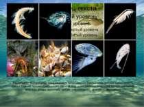 Ракоподібні. Верхній ряд, зліва направо: спелеонектес (гребненогі), дафнія (г...