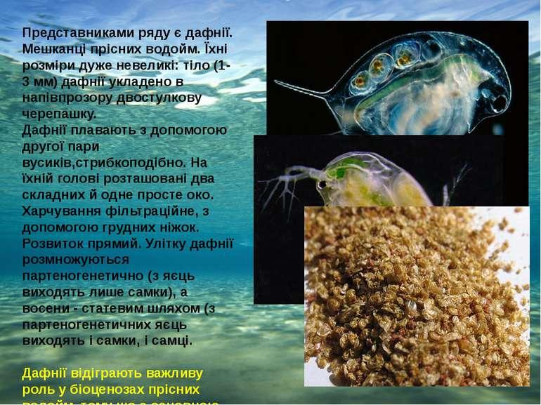 Представниками ряду є дафнії. Мешканці прісних водойм. Їхні розміри дуже неве...