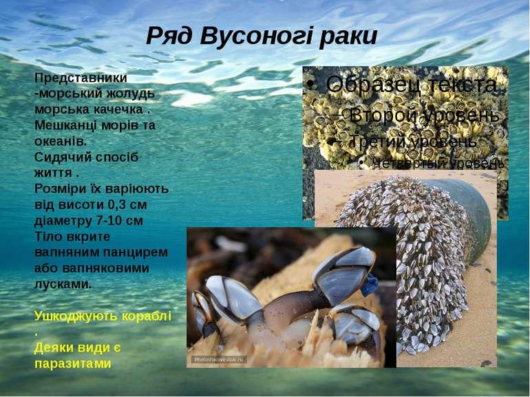 Ряд Вусоногі раки Представники -морський жолудь морська качечка . Мешканці мо...