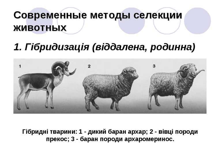 Современные методы селекции животных 1. Гібридизація (віддалена, родинна) Гіб...