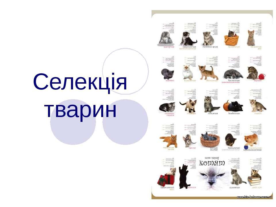 Селекція тварин