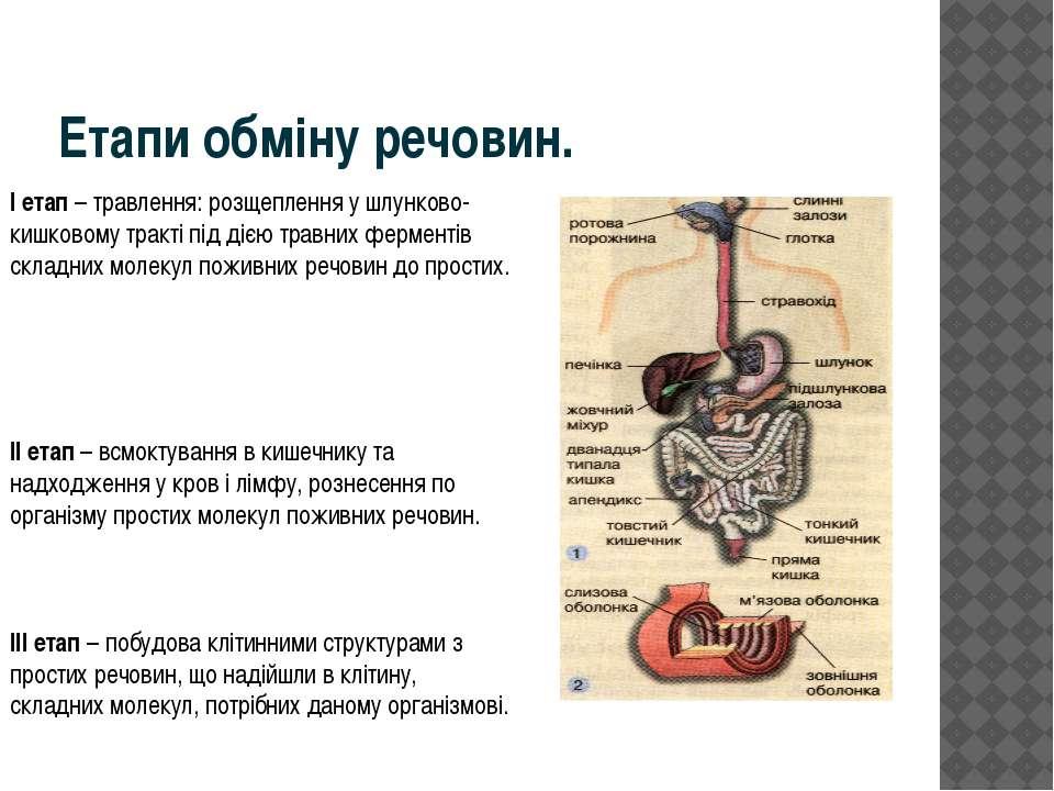 Етапи обміну речовин. I етап– травлення: розщеплення у шлунково-кишковому тр...