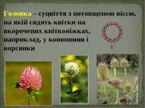 Головка – суцвіття з потовщеною віссю, на якій сидять квітки на вкорочених кв...