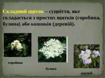 Складний щиток – суцвіття, яке складається з простих щитків (горобина, бузина...