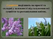 Суцвіття поділяють на прості та складні у залежності від галуження осі суцвіт...