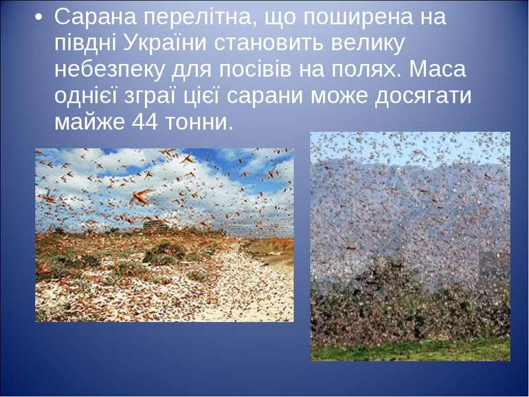 Сарана перелітна, що поширена на півдні України становить велику небезпеку дл...