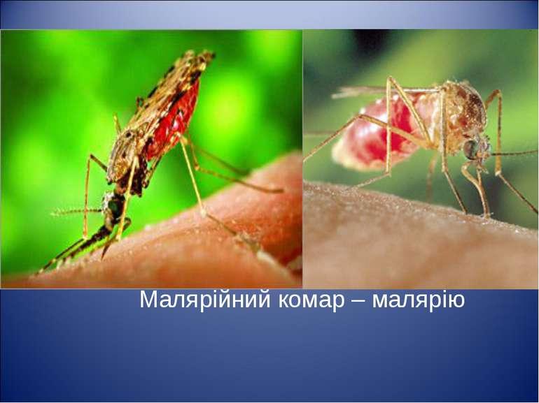 Малярійний комар – малярію