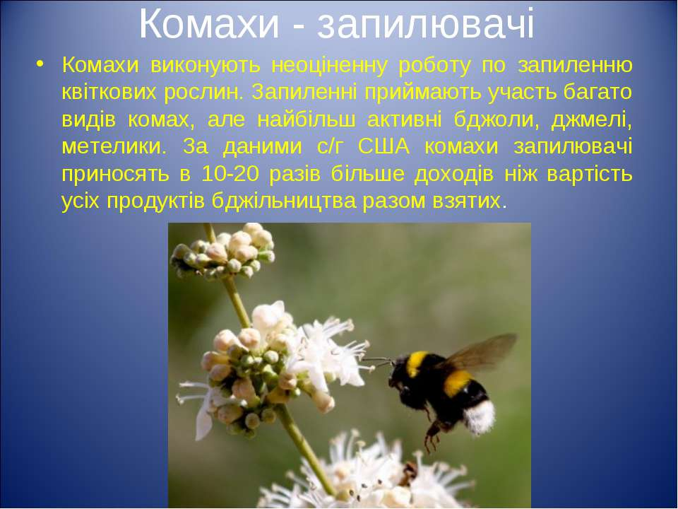 Комахи - запилювачі Комахи виконують неоціненну роботу по запиленню квіткових...