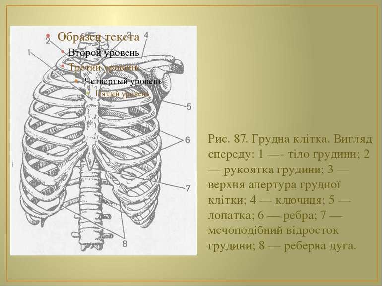 Рис. 87. Грудна клітка. Вигляд спереду: 1 —- тіло грудини; 2 — рукоятка груди...