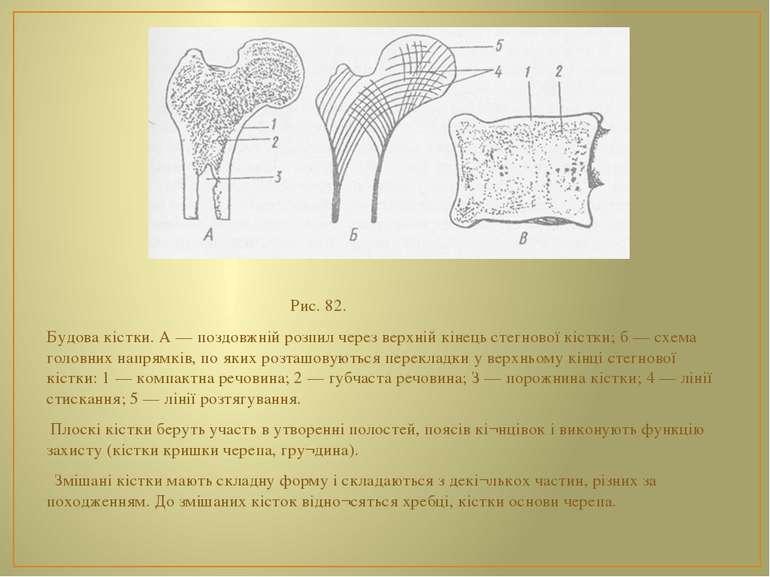 Рис. 82. Будова кістки. А — поздовжній розпил через верхній кінець стегнової ...