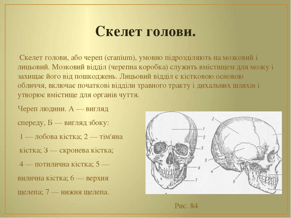 Скелет голови. Скелет голови, або череп (cranium), умовно підрозділяють на мо...