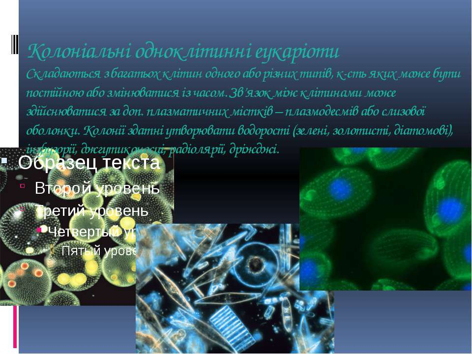 Колоніальні одноклітинні еукаріоти Складаються з багатьох клітин одного або р...
