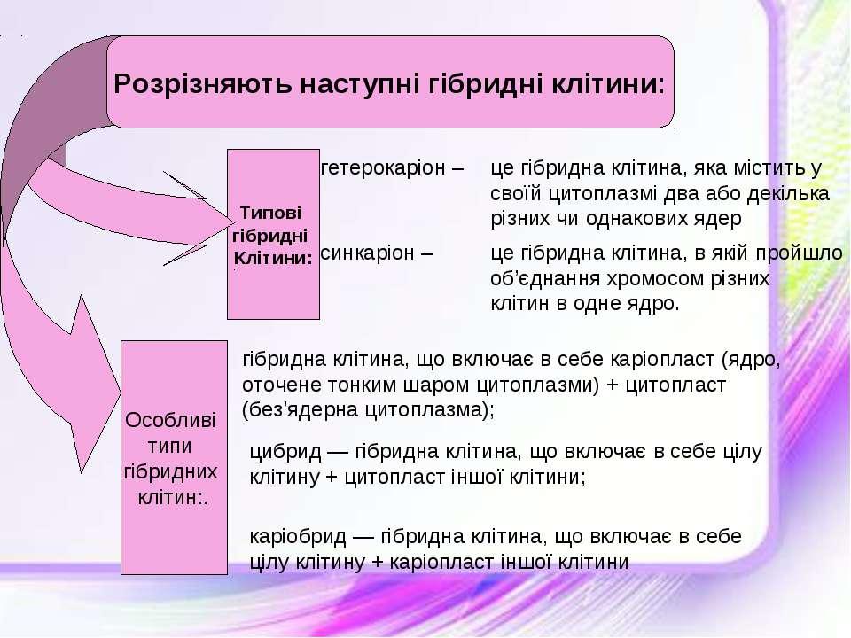Типові гібридні Клітини: гетерокаріон – це гібридна клітина, яка містить у св...
