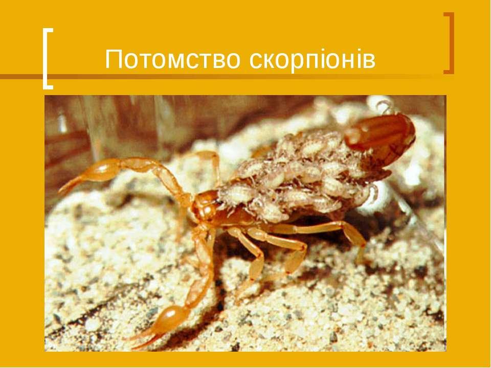 Потомство скорпіонів