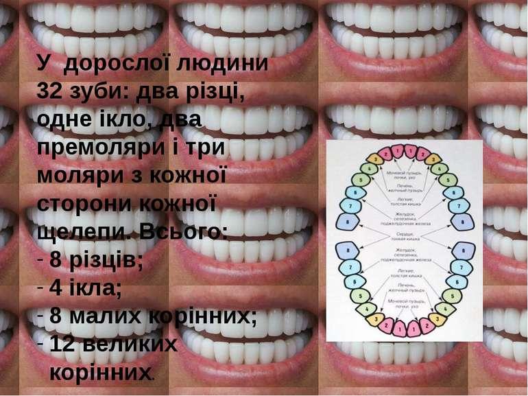 У дорослої людини 32 зуби  два різці bb421894bbb00