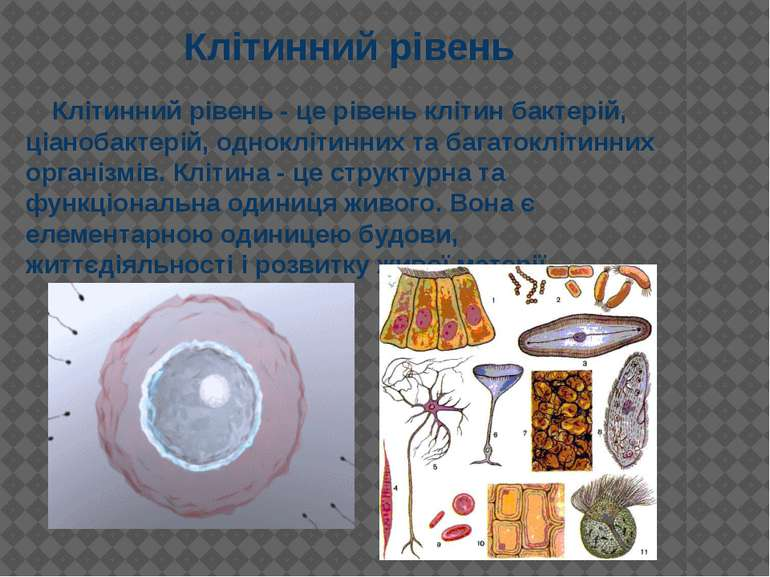 Клітинний рівень - це рівень клітин бактерій, ціанобактерій, одноклітинних та...
