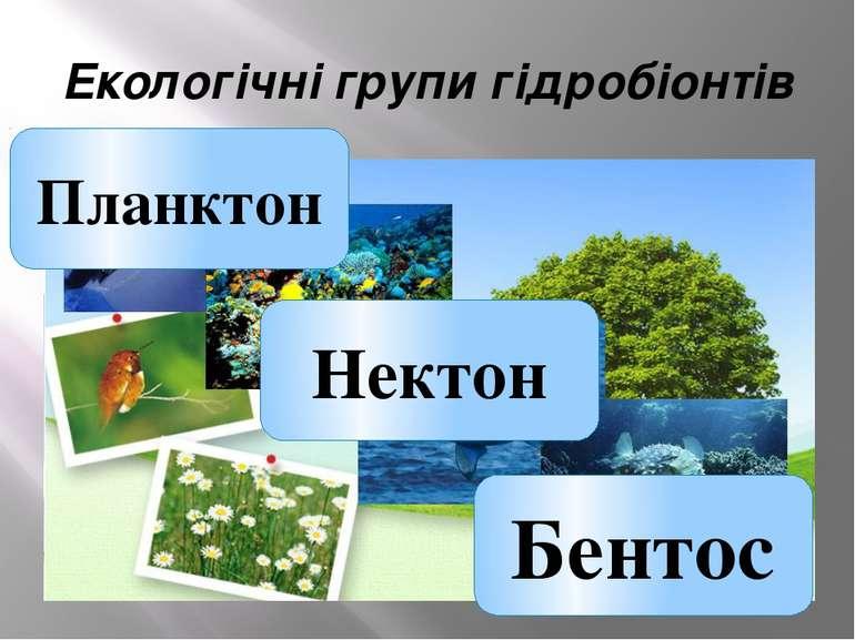 Екологічні групи гідробіонтів Нектон Бентос Планктон